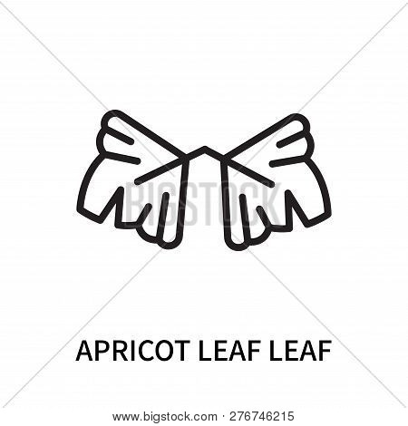 Apricot Leaf Leaf Icon Isolated On White Background. Apricot Leaf Leaf Icon Simple Sign. Apricot Lea