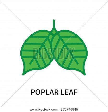 Poplar Leaf Icon Isolated On White Background. Poplar Leaf Icon Simple Sign. Poplar Leaf Icon Trendy