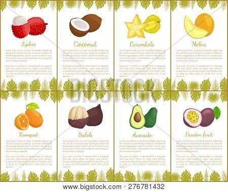 Lychee Coconut And Carambola Tropical Exotic Fruits Vector. Kumquat And Salak, Avocado And Melon, Or