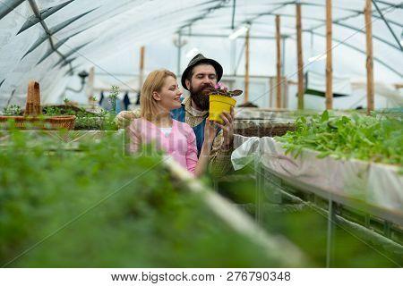 Flower Care. Flower Care Concept. Happy Couple Take Care Of Flower. Flower Care Of Professional Gard