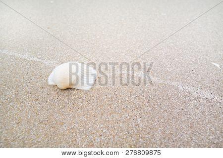 White Shell On Sand Beach, Laem Talumphuk, Pak Phanang, Nakhon Si Thammarat, Thailand.
