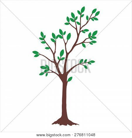 Tree With Color Green Leaves. Tree Icon Isolated On White Background. Tree Icon Simple Sign. Tree Ic