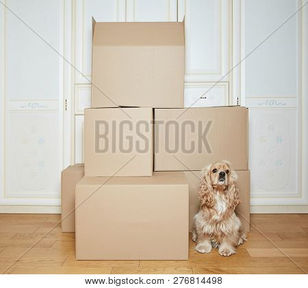 Moving Boxes. Cardboard Box. Stack Of Boxes.  Dog Moves