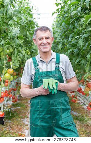 Portrait of smiling senior farmer with gloves standing against tomato farm
