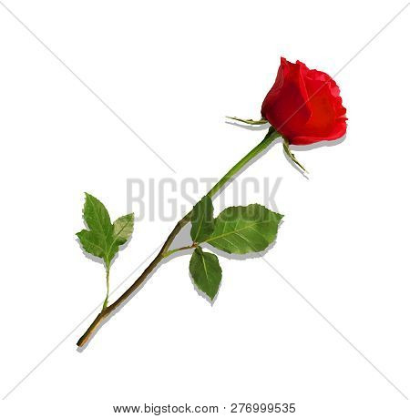 Illustration Of Photo-realistic, Highly Detailed Flower Of Red Rose Isolated On White Background. Be