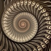 Abstract fractal spiral. Shell background, Spiral symmetry Fibonacci shell section. Half cross, golden ratio structure, growth close up Pompilius nautilus poster