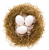 Three chicken eggs and feathers in a nest from a dry grass on a white background poster