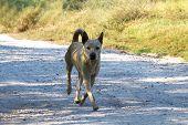 Dog running, Guard dog run, Fierce dog beware, Ugly dog poster