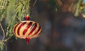 Sunlight Shines On Lovely Striped Golden Christmas Ornament Outdoors Hanging On A Live Pine Tree In