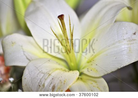 Bunch of lillies