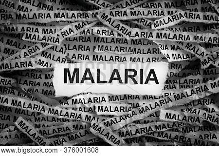 Malaria. Torn Pieces Of Paper With The Word Malaria. Concept Image. Black And White. Close Up.