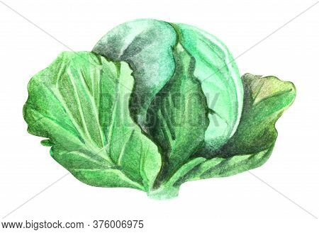 Watercolor Image Of Green Leafy Cabbage Isolated On White Background. Hand Drawn Sketch Of Crucifero
