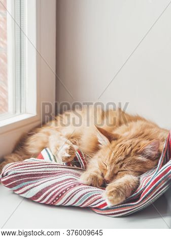 Cute Ginger Cat Sleeps On Window Sill. Fluffy Pet Has A Nap On Colorful Textile Curtain. Domestic An