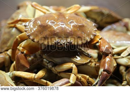 Rock Crab AKA Stone Crab. Live Crab for sale at a Open Air Market.
