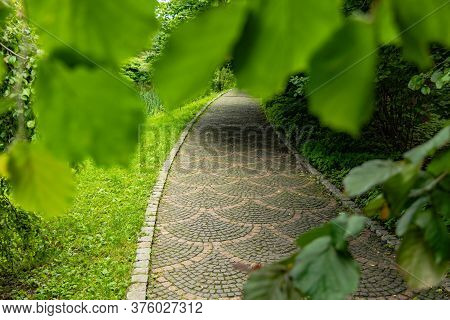 Paved Road Park Outdoor Promenade Walking Way In Green Foliage Nature Frame Work Photography Concept