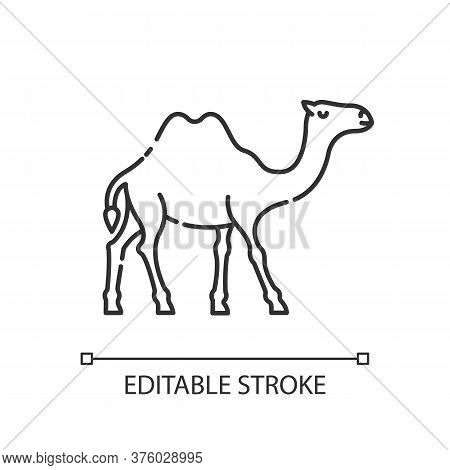 Camel Pixel Perfect Linear Icon. Exotic Wildlife, Wilderness Inhabitant Thin Line Customizable Illus