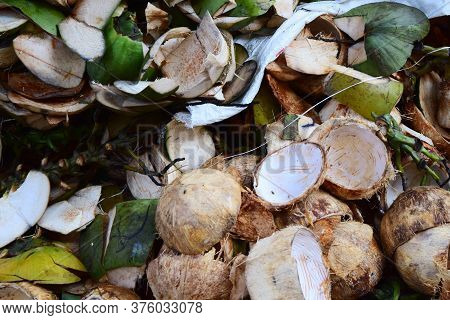 Coconut Skin Waste - Coconut Skin After Peeling And Discarding