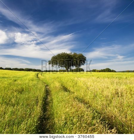 Summer Landscape With Tree And Path