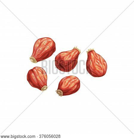 Rose Hip Dried Fruits, Dry Food Snacks Vector Icon. Dried Rose Hips, Fruity Sweets, Diet Nutrition A