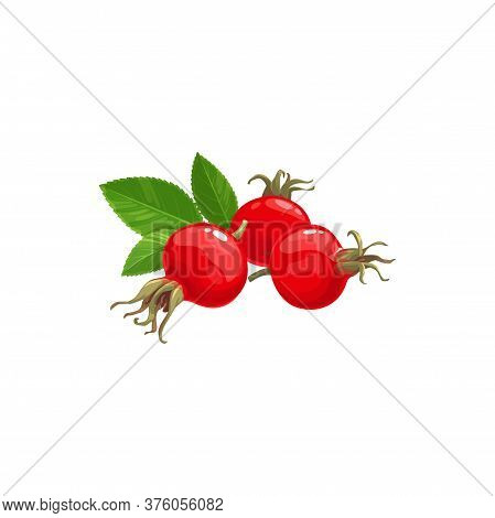 Rose Hip Fruits Icon, Berries Food From Farm Garden And Wild Forest Vector. Rosehip Fruits, Rose Hip