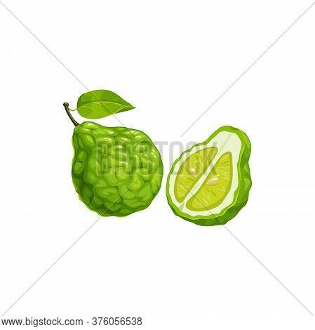 Bergamot Orange Fruit, Tropical Exotic Food, Vector Isolated Icon. Bergamot Orange Fruits Half Cut A