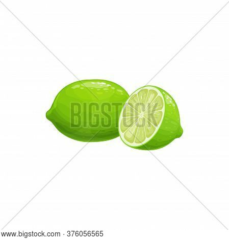 Lime Fruit, Tropical Exotic Citrus, Vector Isolated Food Icon. Lime Fruits Half Cut And Whole, Tropi