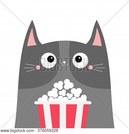 Gray Cat Popcorn Box Vector Photo Free Trial Bigstock
