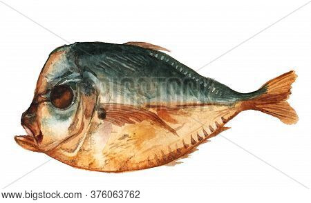 Smoked Lockdown Fish. Watercolor Image Isolated On White Background. Salted Snack.