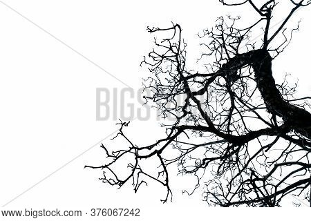 Silhouette Dead Tree Isolated On White Background With Copy Space. Death, Lament, Sad, Grief, Hopele