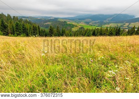 Landscape With Grassy Meadow. Field On The Hill Beneath An Overcast Sky. Countryside Summer Scenery