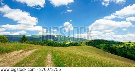 Path Through The Meadow In Mountains. Sunny Summer Landscape Of Carpathian Countryside. White Fluffy