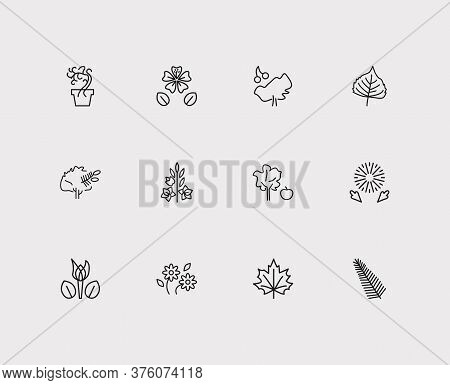 Nature Icons Set. Daisy And Nature Icons With Dandelion, Maple, Poplar Leaf. Set Of Fresh For Web Ap