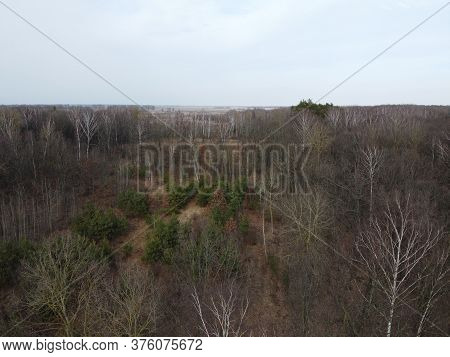 Leafless Trees In The Forest In The Late Evening, Aerial View. Landscape.
