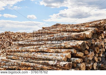 Stacks Of Birch Logs And Heap Of Firewood Chocks In A Vast Lumber Yard