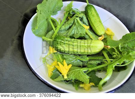 Cucumbers Fresh Organic Natural Traditional Season Product Longevity Gourmet Delicious Diet Green Le