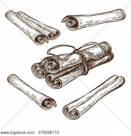 Hand Drawn Cinnamon Sticks And Rolls Vector Illustration. Cannella Sketch Collection Isolated On Whi