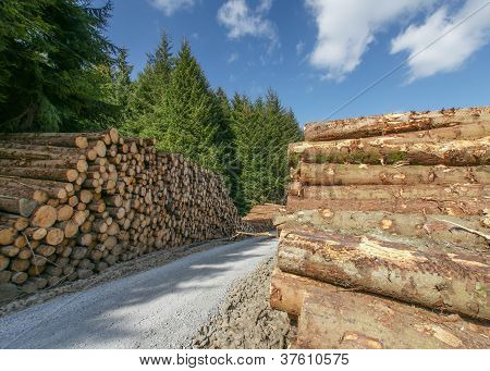 Pile Of Freshly Cut Logs