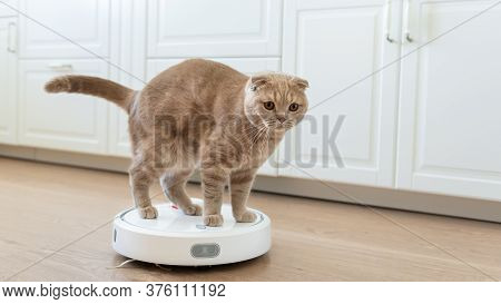 Funny Cat Playing With A Robot Vacuum Cleaner. Pet Friendly Smart Vacuum Cleaner. Housekeeping Help,