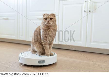 Funny Cat Sitting On A Robot Vacuum Cleaner. Pet Friendly Smart Vacuum Cleaner. Housekeeping Help, N