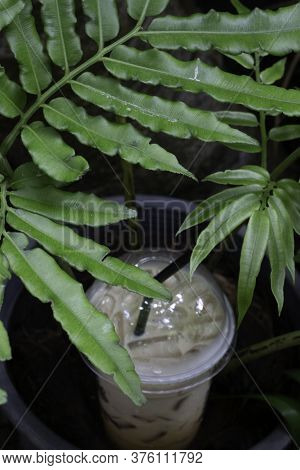 Iced Coffee Drink In Resort Garden, Stock Photo
