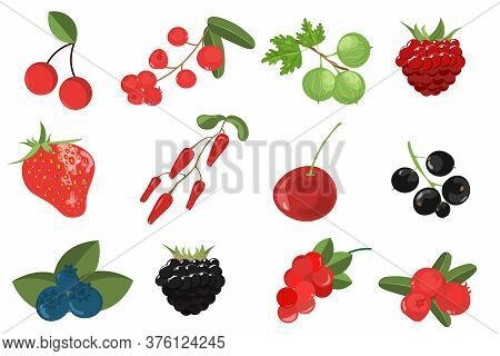 Set Branches Berries And Leaves. Gooseberries, Cranberries, Blueberries, Barberries, Currants, Cherr