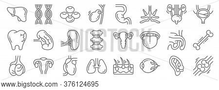 Human Organs Line Icons. Linear Set. Quality Vector Line Set Such As Bone, Eyeball, Lungs, Testicles