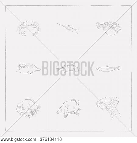 Set Of Seafood Icons Line Style Symbols With Harbor Seal, Carp, Sardine And Other Icons For Your Web