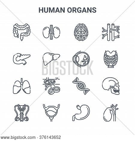Set Of 16 Human Organs Concept Vector Line Icons. 64x64 Thin Stroke Icons Such As Kidney, Pancreas,