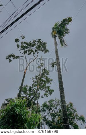 Super Cyclone Amphan Broke A Tree Which Fell On Ground. The Devastation Has Made Many Damages To Wes