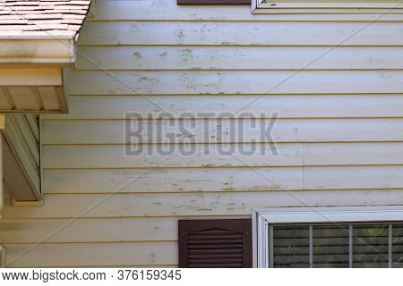 An Image Of Green Mold On Vinyl Siding On The Exterior Of A Residential Home