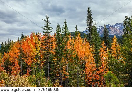 Magnificent northern autumn. Yellow, orange and red autumn leaves adorn the mountainous landscape. Canadian Rockies. Rocky mountains of Canada.