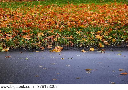 A Carpet Of Fallen Colored Leaves On The Grass Next To The Asphalt