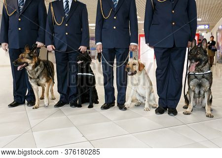 A Group Of Dogs For Detecting Drugs At The Airport Standing Near The Customs Officers.