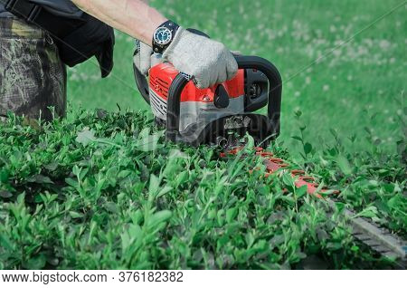 Man In White Work Gloves Trims The Hedges With An Electric Hedges Trimmer. Pruning Shears For Cuttin